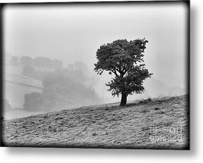Metal Print featuring the photograph Oak Tree In The Mist. by Clare Bambers