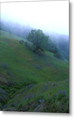 Oak With Lupine In Fog Metal Print by Kathy Yates