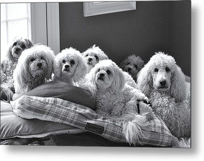 Obedience School For Dogs Metal Print