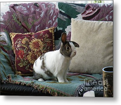 Obelix The Rabbit  Metal Print by Vicky Tarcau