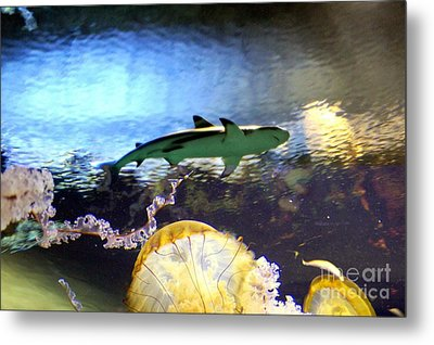Ocean Encounter Metal Print by Kevin Moore