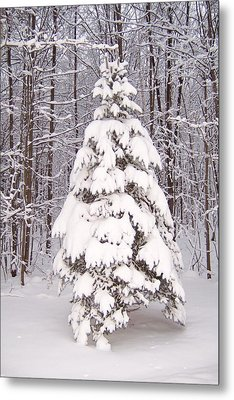 Oh Christmas Tree Metal Print by Krista Ouellette