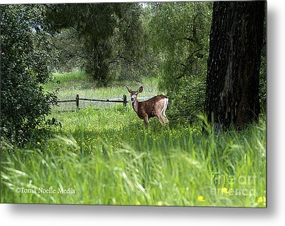 Metal Print featuring the photograph Oh Deer by Tonia Noelle