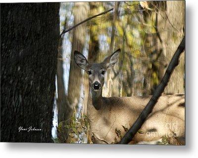 Metal Print featuring the photograph Oh Deer by Yumi Johnson