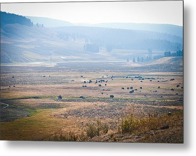 Oh Home On The Range Metal Print by Cheryl Baxter