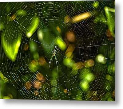 Oh The Web We Weave Metal Print by Barbara Middleton