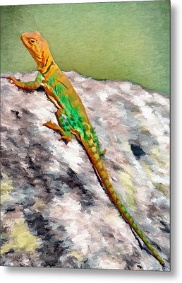 Oklahoma Collared Lizard Metal Print by Jeffrey Kolker