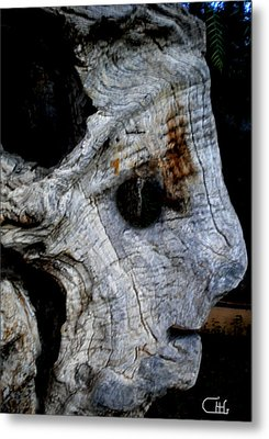 Old Ancient Olive Tree In Spain Metal Print by Colette V Hera  Guggenheim