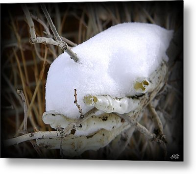 Old Man Winter's Hand Metal Print by Michelle Frizzell-Thompson
