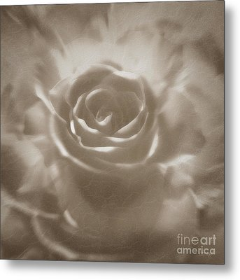 Metal Print featuring the digital art Old Rose by Johnny Hildingsson
