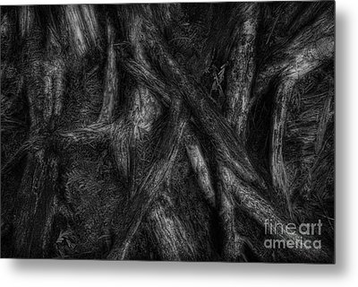 Old Silvery Roots Metal Print by David Gordon