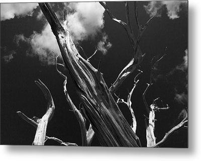 Metal Print featuring the photograph Old Tree by David Gleeson