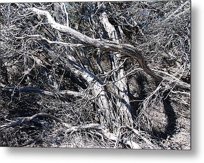 Old Wind Swept Tree Metal Print