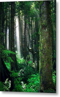Olympic Forest Metal Print by Ric Soulen