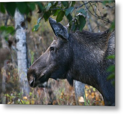 Metal Print featuring the photograph On Alert by Doug Lloyd