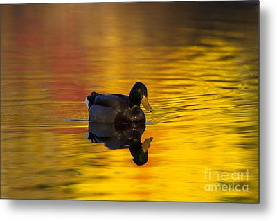 On Golden Waters Metal Print by Mike  Dawson