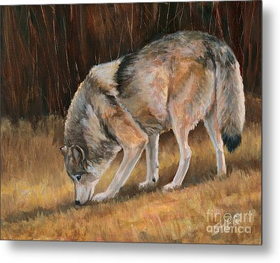 On The Trail - Wolf Metal Print
