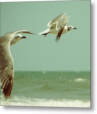 On The Wings Of A Seagull Metal Print