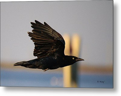 One Black Bird Metal Print by Roena King