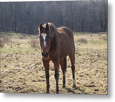 One Funny Horse Metal Print by Robert Margetts