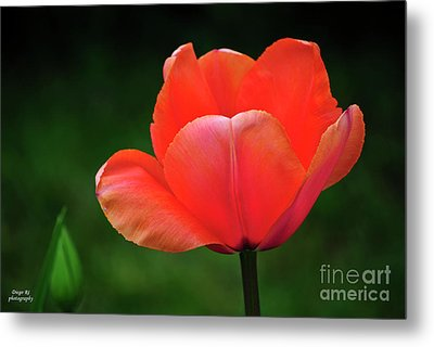 Opened Red Metal Print by Diego Re