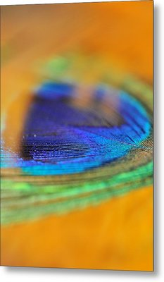 Orange And Blue Feather Metal Print by Puzzles Shum