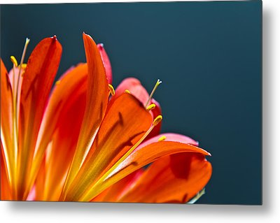 Metal Print featuring the photograph Orange And Blue by Justin Albrecht