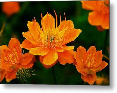 Orange And Yellow Metal Print by Eric Tressler
