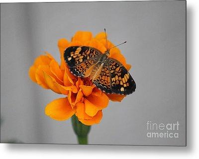 Orange Butterfly 1 Metal Print