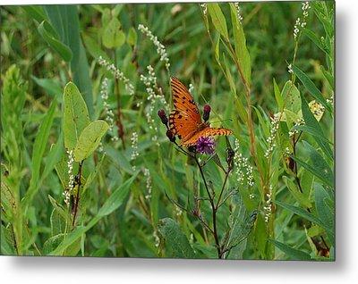 Orange Butterfly Metal Print by Beverly Hammond