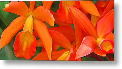 Orange Cattleya Orchid Metal Print by Becky Lodes
