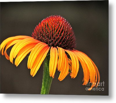 Metal Print featuring the photograph Orange Crown by Eve Spring