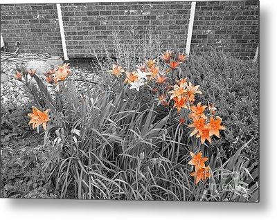 Orange Day Lilies. Metal Print by Ausra Huntington nee Paulauskaite