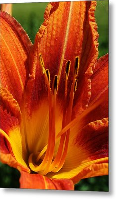 Orange Daylily Metal Print by Bruce Bley