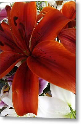 Metal Print featuring the photograph Orange Glow by Gary Brandes