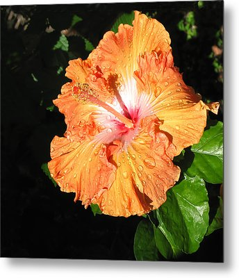 Orange Hibiscus After The Rain 1 Metal Print by Connie Fox