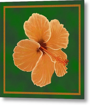 Orange Hibiscus Metal Print by Tim Stringer