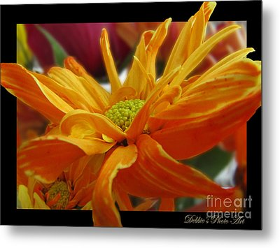 Metal Print featuring the photograph Orange Juice Daisy by Debbie Portwood