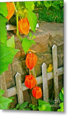 Orange Lanterns Metal Print