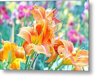 Orange Lilies Metal Print by Becky Lodes