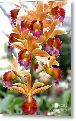 Metal Print featuring the photograph Orange Orchids by Debbie Hart
