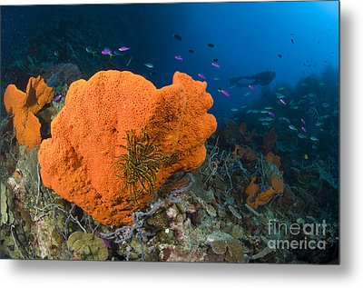 Orange Sponge With Crinoid Attached Metal Print by Steve Jones