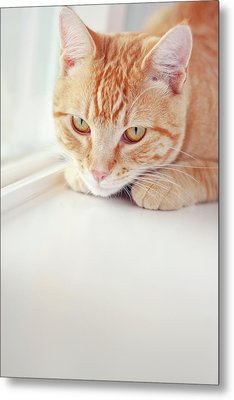 Orange Tabby Cat On White Window Sill Metal Print by Kellie Parry Photography