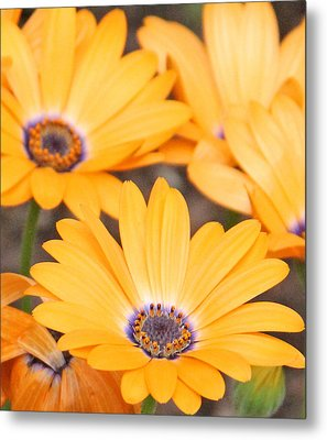 Orange With Purple Center Metal Print by Becky Lodes
