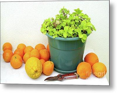 Oranges And Vase Metal Print by Carlos Caetano