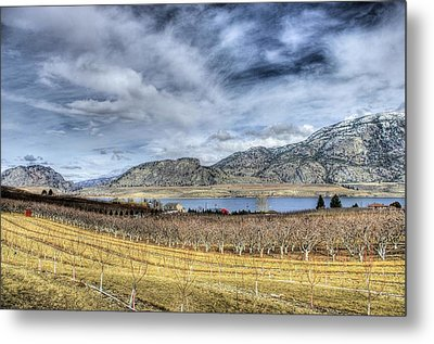 Orchards And Vineyards Metal Print by John  Greaves