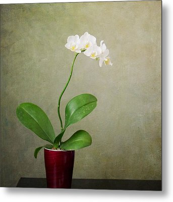 Orchid 2 Metal Print by Mary Hershberger