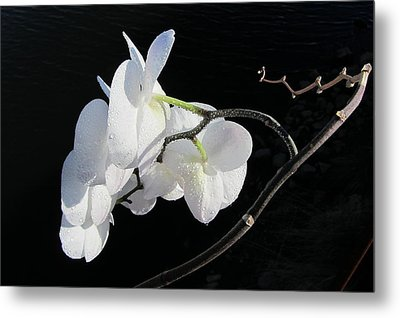 Orchid Above River Metal Print