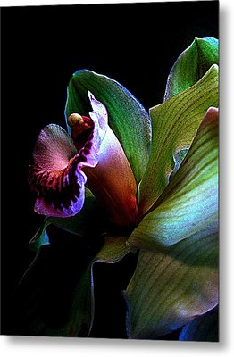 Orchid Gem Metal Print by Shirley Sirois