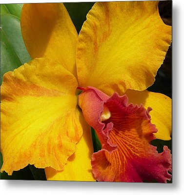 Orchid No. 21 Metal Print by Gregory Young